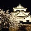 2016年  彦根城の桜  ライトアップ♪